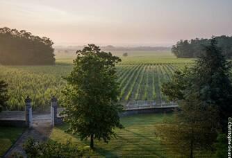 Château Malescasse - La vigne