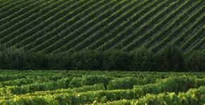 Château Haut Breton Larigaudière(Bordeaux) : Visite & Dégustation Vin