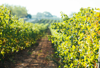 Domaine de la Baume - Les vignes