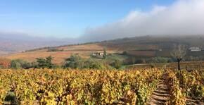 Domaine de la Bouronière - Le vignoble