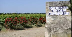 Château de la Tuilerie(Vallée du Rhône) : Visite & Dégustation Vin
