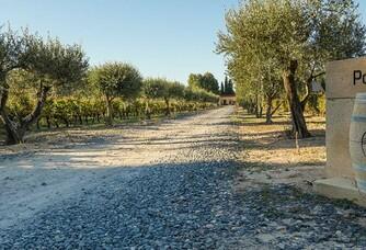 Domaine de Poulvarel - Les oliviers