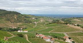 Domaine Ludovic Charvet - Le vignoble du Beaujolais