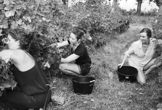 6ème génération de vignerons : les 3 filles Nadal