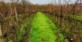 Château Pré la Lande - Les rangs de vigne