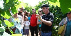 Plaimont(Sud-Ouest) : Visite & Dégustation Vin