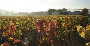 Les vignes du Domaine Berthier en automne.