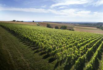 Le Vignoble Berthier vu du ciel.