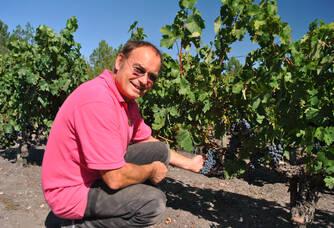 Château Léognan - Les grappes dans les vignes