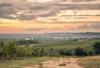 La Bastane - Coucher de soleil sur le vignoble