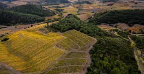 Clos Des Vins d'Amour(Roussillon) : Visite & Dégustation Vin