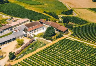 Le château et les vignes