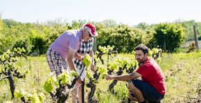 Domaine Rouge-Bleu(Vallée du Rhône) : Visite & Dégustation Vin