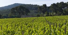 La Coste (Provence) : Visite & Dégustation Vin