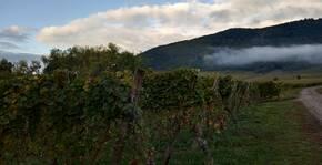 Parcelle de vigne Grand Cru Sporen Riquewihr Domaine Greiner vins Bio Alsace