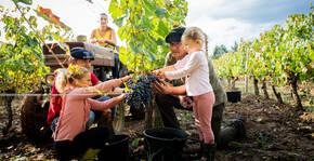 Domaine la paganie(Sud-Ouest) : Visite & Dégustation Vin