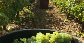CHATEAU DU BOIS HUAUT(Loire) : Visite & Dégustation Vin