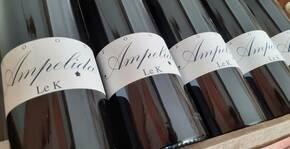 Ampelidae(Loire) : Visite & Dégustation Vin