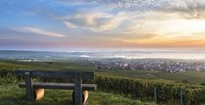Belle vue sur le vignoble du Domaine Rieflé