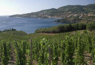 Les vignes du Domaine Madeloc