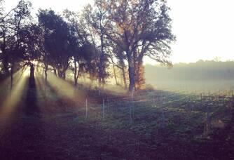 Vue du vignoble à l'aube du Château Barbebelle