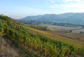 Les vignes du Domaine Schoenheitz