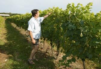 Guy dans ses vignes du Château Laurou
