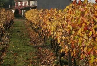 Une vue des vignes du Château Laurou