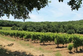 Le vignoble du Château de Maillac