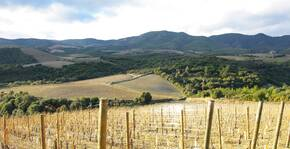 Vignoble ensoleillé au Domaine Cottebrune