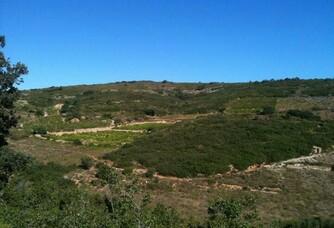 Vue sur le vignoble du Domaine de L'Horizon