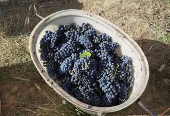 Les belles récoltes du Domaines des Païssels