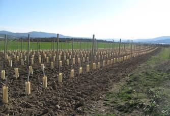 Les pieds de vignes du Domaine Jeanne Gaillard