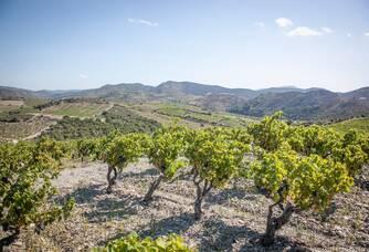 Un autre cliché du vignoble du Domaine Lerys