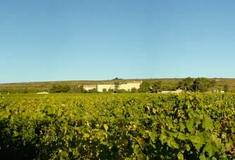 Panorama des vignes du Château d'Anglès
