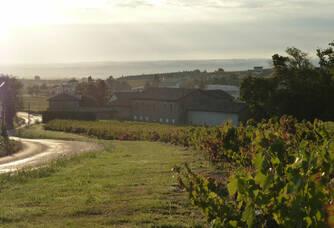 Paysage du Domaine Les Capréoles